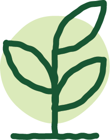 A hand drawn illustration of a growing plant.