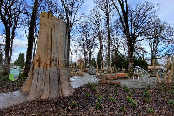 Infinity tree at Anna & Abby's Yard